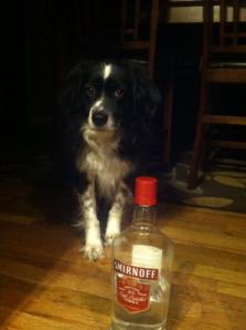 Got this photo from my brother while he was dogsitting. Foster drinks because Mommy leaves.