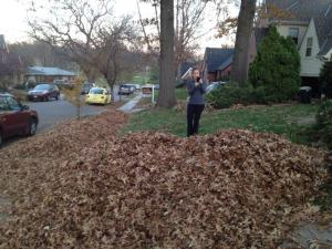 this was raking her leaves LAST year...pile was about the same. But without the human we hid at the bottom for fun last year. Miss you, Erik!